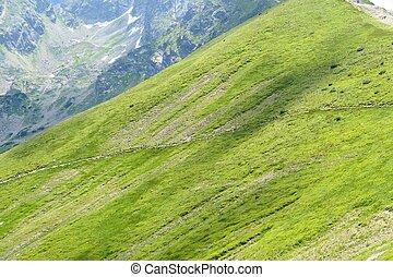 bergen, alp, tatra, groene, poland.