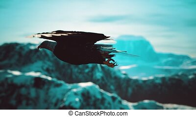 bergen, amerikaan, op, motie, vertragen, alaskan, vlucht, kale adelaar