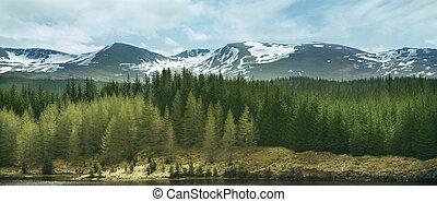 bergen, hoogland, bossen