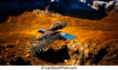 bergen, op, adelaar, amerikaan, kaal, slowmotion, alaskan, vlucht