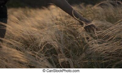 beroeren, gematigd, veer, gras