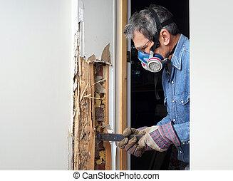 beschadigd, muur, het verwijderen, termiet, hout, man
