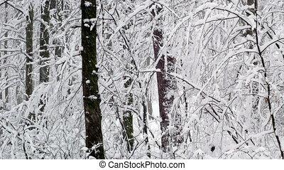 besneeuwd, bos, bomen, winter