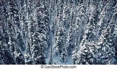 bevroren, op, vliegen, bomen, besneeuwd
