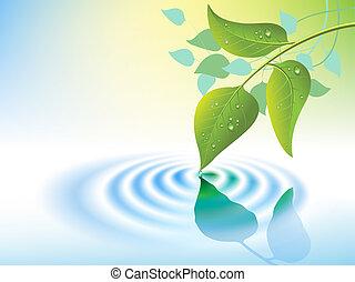 bewateer ripple, blad