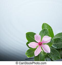 bewateer ripple, bloem