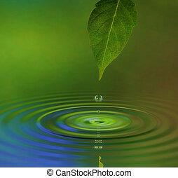 bewateer ripple