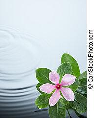 bewateer ripple, plant, bloem
