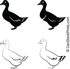 black , eenden