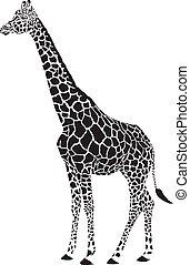 black , giraffe, vector, witte