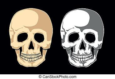 black., laye, menselijke schedel, afwerpen