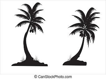 black , palmen