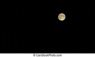 black , volle, hemel, maan