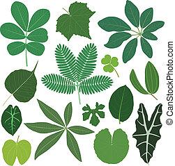 blad, bladeren, plant, tropische