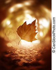 blad, boompje, op, herfst, achtergrond, afsluiten, het vallen