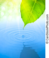blad, druppel, water, groene, herfst, rimpeling