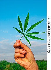 blad, hemel, marihuana, tegen, hand, groene