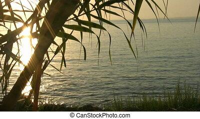 blad, ondergaande zon , silhouetted