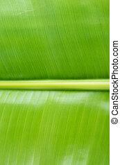 blad, op, textuur, groene achtergrond, afsluiten, banaan