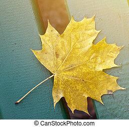 blad, park, op, gele, bankje, herfst, afsluiten