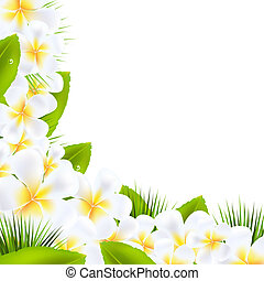 blad, randjes, frangipani, bloemen