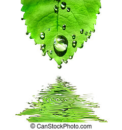 blad, vrijstaand, water, groen wit, druppels