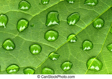 blad, water, achtergrond, groene, druppels