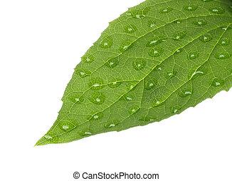 blad, water, achtergrond, groene, druppels, witte