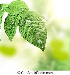 blad, water, groene achtergrond, drots, natuurlijke