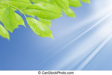 blad, water, groene achtergrond, natuurlijke , druppels