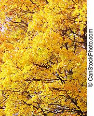 bladeren, achtergrond, gele