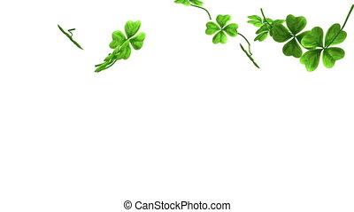 bladeren, beeldmateriaal, het vallen, klaver