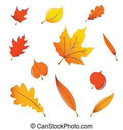 bladeren, diversen, herfst