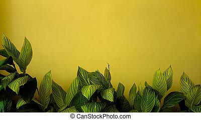 bladeren, gele achtergrond