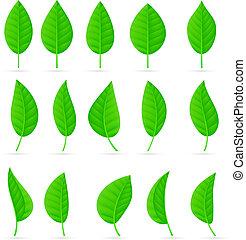bladeren, gevarieerd, gedaantes, groene, types