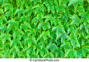 bladeren, groene achtergrond