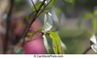 bladeren, groene, hd, boompje