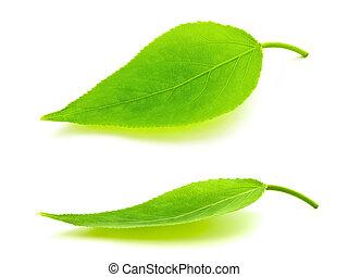 bladeren, groene