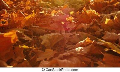 bladeren, grond, herfst, esdoorn, park