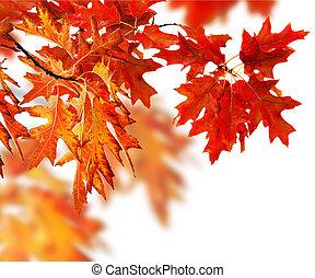bladeren, herfst, grens