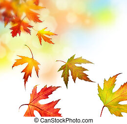 bladeren, herfst, mooi