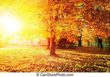 bladeren, herfstachtig, bomen, herfst, fall., park.