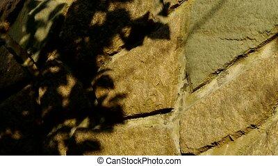 bladeren, schommel, schaduw, silhouette