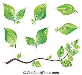 bladeren, set, groene