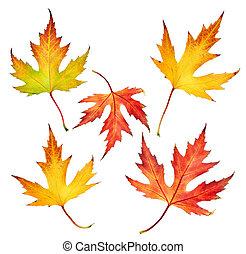bladeren, set, herfst