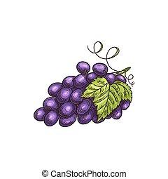 bladeren, verdoezelen, vrijstaand, groep, druif, besjes