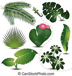 bladeren, verzameling, tropische