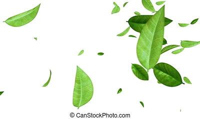 bladeren, vliegen, groen wit