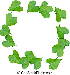 bladeren, vrijstaand, whit, groene, frame