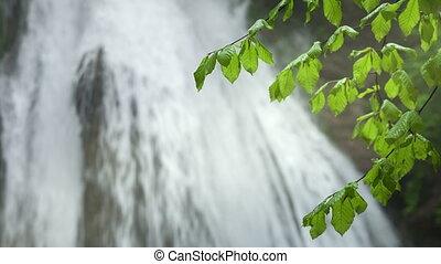 bladeren, waterval, groene achtergrond